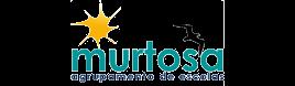 Agrupamento de Escolas da Murtosa